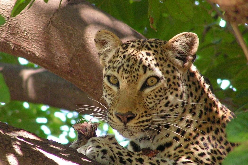 wild africa magazine